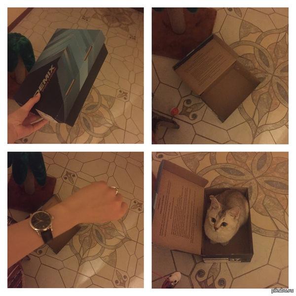 Как завести кота Нужна только коробка и немного времени :)