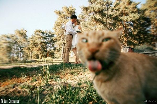 как сэкономили на фотографе ч.2 или тот момент, когда ты кот и снимаешь свадьбу своих хозяев, а твой ассистент испортил фото