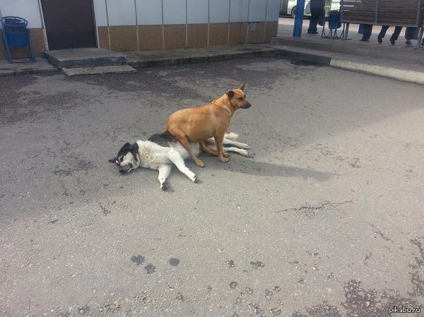А у животных почти все так же как и у людей Ж/д станция в Солнечногорске