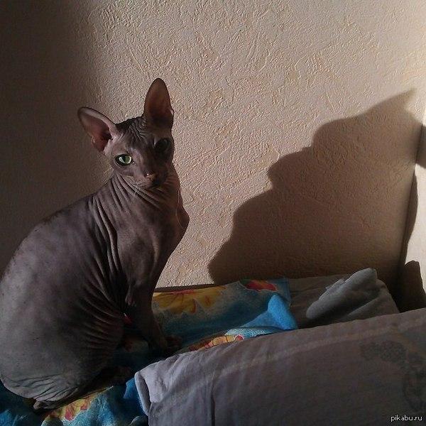 Этот кот что-то скрывает... (посмотрите на тень)