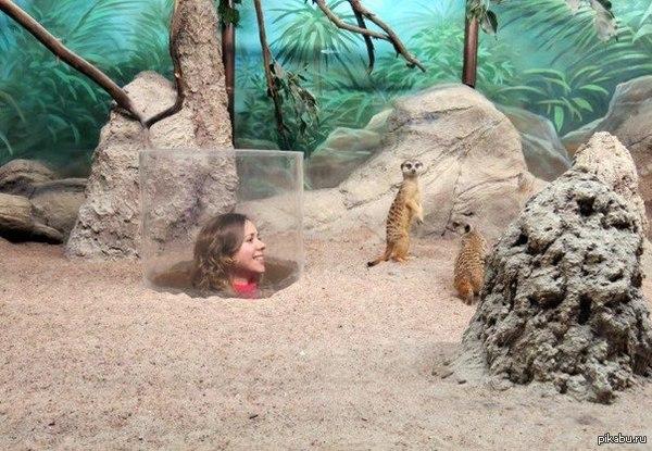 Вот в такой зоопарк я бы сходил!