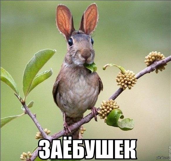 https://cs4.pikabu.ru/post_img/2015/10/14/11/1444849188_2014641320.jpg