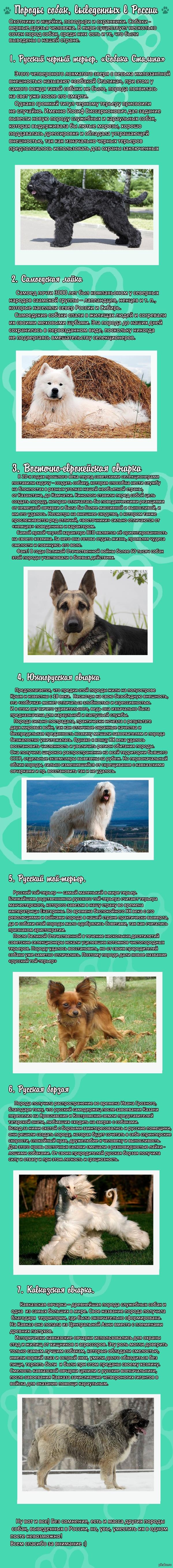 Интересные породы собак, выведенных в нашей стране Надеюсь, кого-то заинтересует)