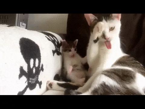 Котенок пытается подражать маме=)