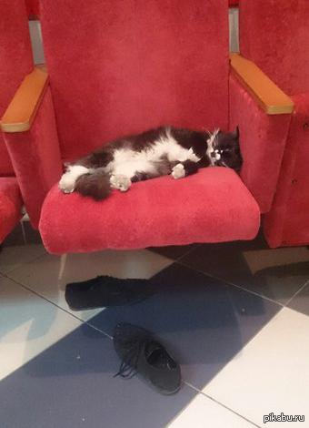 Для полного счастья не хватает миски молока.. вот такого спящего друга встретила в местном ДК. Около него предполагаемого хозяина обуви найдено не было)