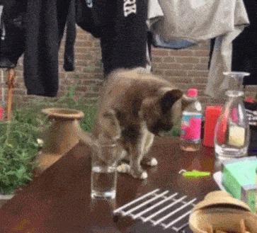 Как легко попасть в черный список котейки Краткая инструкция =)