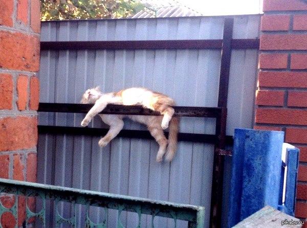 Когда ты пьян и тебе все равно, где лечь спать.