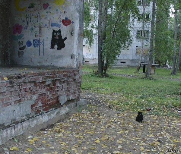 Кот долго и удачно позировал)
