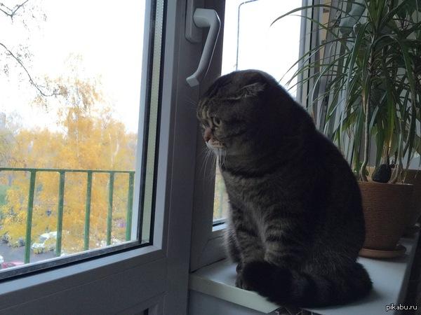 Просто кот смотрит на осень...