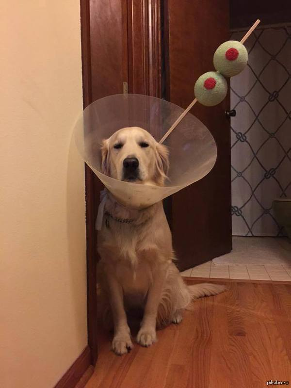 Мартини, собака не в восторге
