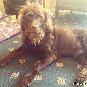 Моя собака становится похожа на философа 19-го века. Из комментов : Karl Barx (Карл Маркс).    Игра слов: Bark - лай,гавкать.