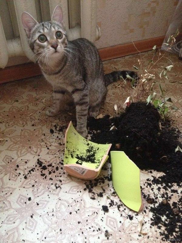 Все любят котеек Все котейки любят шалить