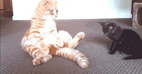 Коты картинки прикольные гифки, приколы для