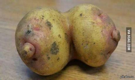 Картошка-сиськи