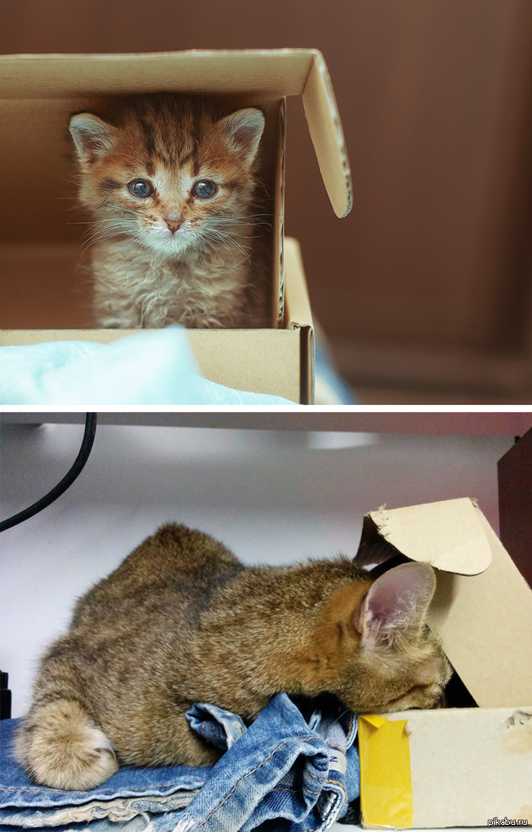 Прошел год, а любовь к коробке осталась.