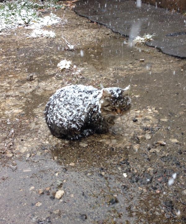 Спокойствие-проявление силы! Во время первого снега в Москве.