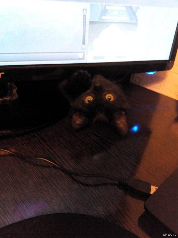 Мой кот крайне тщательно следит за тем, чем я занимаюсь
