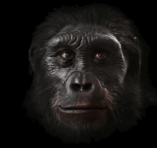 Шесть миллионов лет эволюции мужского лица Ссылка на видео внутри