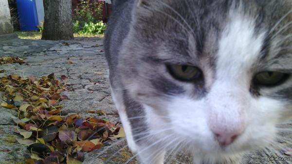Мой котэ. Зовут Барсук