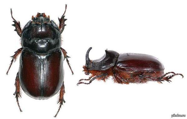 В продолжение темы о жуках... пользуясь случаем продам гараж! недорого!! Без жуков !!!
