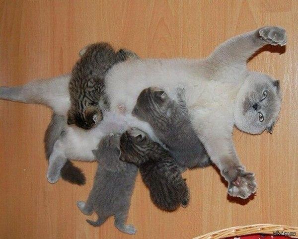 cat lease