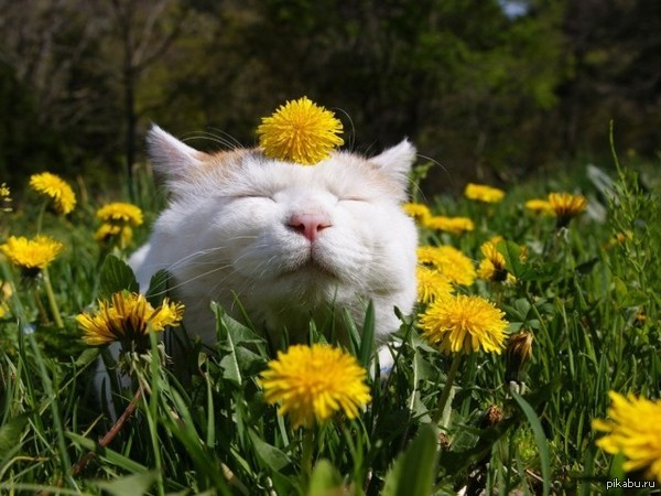 what plants keep cats out of your yard