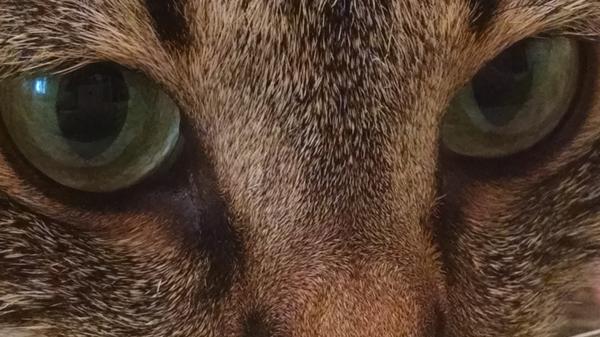 Кира Кот, Кира, Фото, Длиннопост