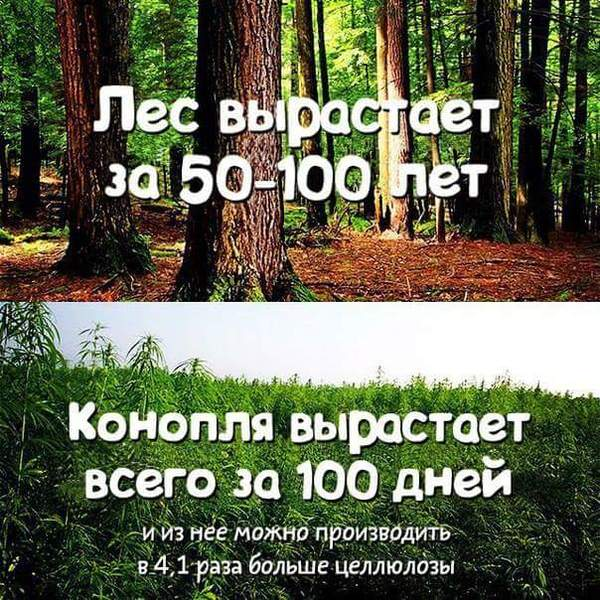 Правоохоронці знищили 6 тисяч кущів наркотичних конопель на Дніпропетровщині - Цензор.НЕТ 8780
