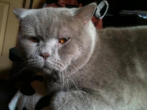 Кот, который устал от бренности мироздания