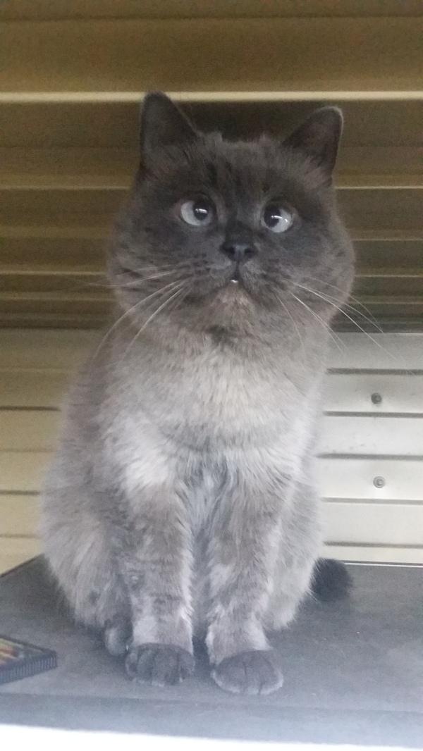 Когда ты кот, у тебя просто не может быть недостатков Кот, Косая, Милота, Длиннопост, Фото