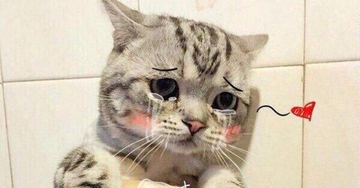 картинки кота и слез проектную