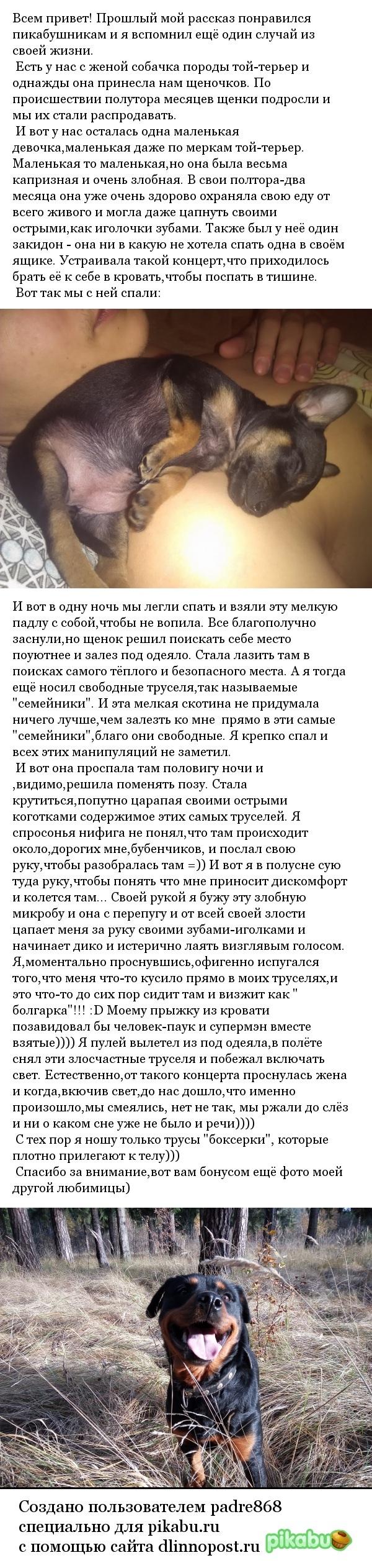 Как я чуть не поседел или Берегите бубенчики))) моё, берегите свое хозяйство мужики, прикол, длиннопост