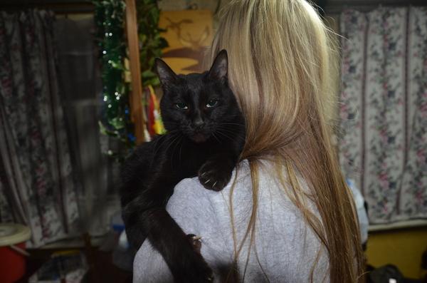 Черная кошка - это маленькая пантера Кот, Черная