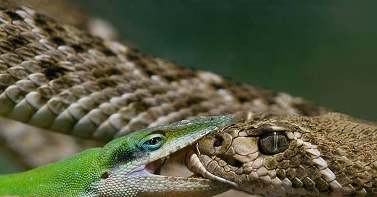 Даты, смешные картинки змея