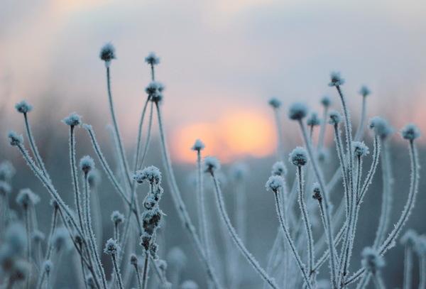 Лето vs зима Зима, Лето, Фото