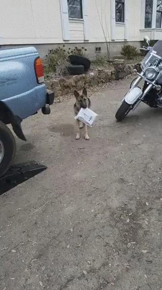 """""""Пытался научить собаку приносить почту"""""""