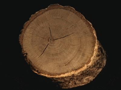 Древесина под микроскопом Дерево, Целлюлоза, Микроскоп, Увеличение, Интересное, Необычное, Zoom_journey, Гифка
