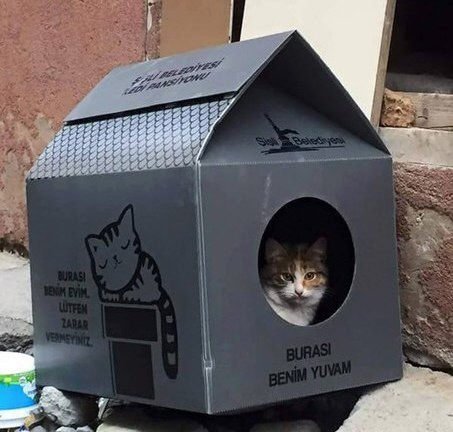 Фото котов в турции