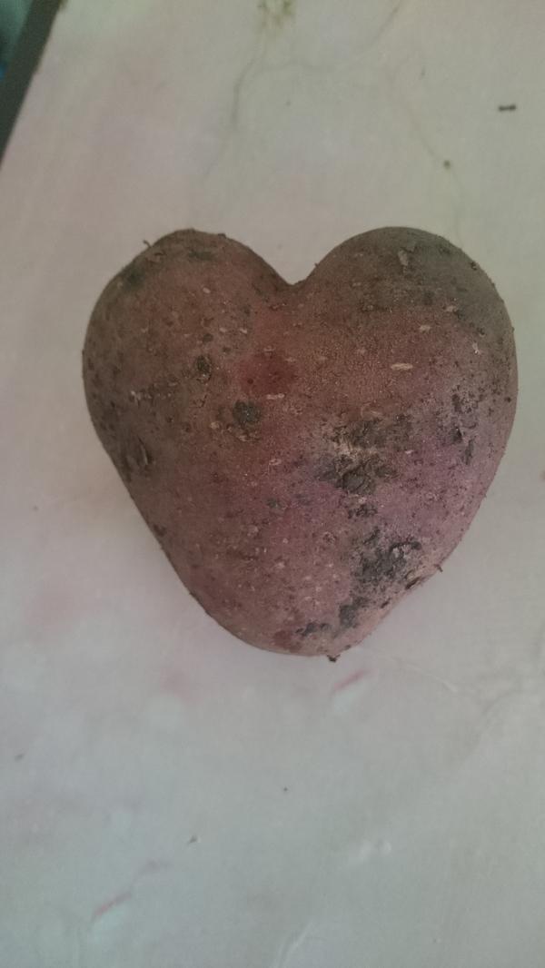 Картошка любви Картофель, Сердечко