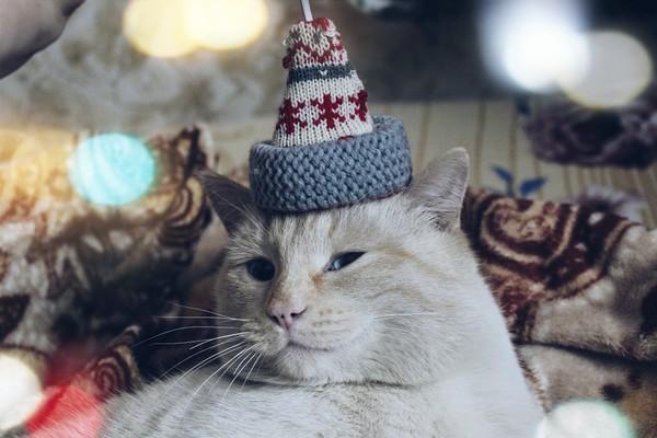 Мой новогодний котан)