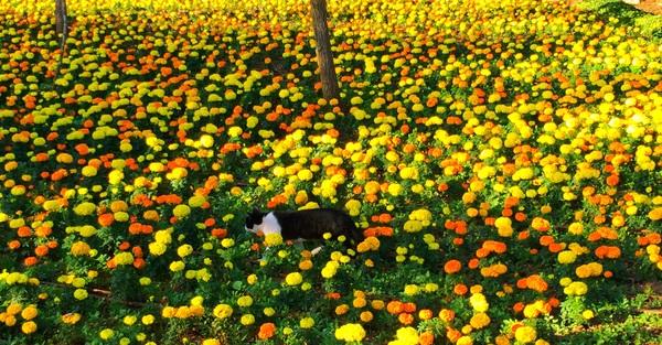 Кошачий рай Кот, Цветы, Рай, Лето