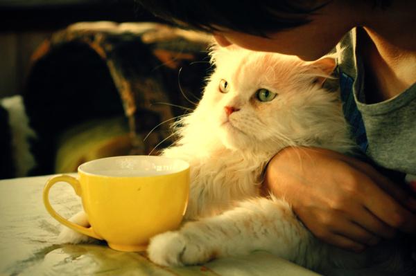 Лень в поэзии Хокку, Хайку, Чай, Лень, М:, Кот