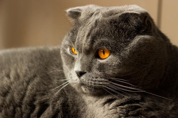 Какое завести животное если есть кот