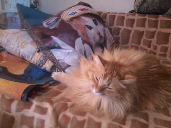 Котов не люблю, всех кроме этого. коты круты, Животные, кот