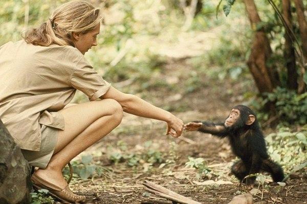Привет, я буду вашим гидом по этому лесу! Природа, Животные, Природа и человек
