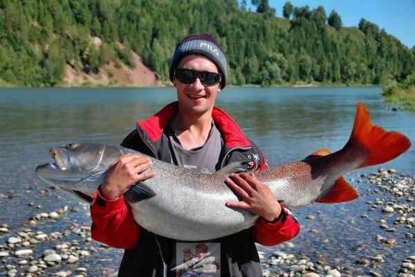 Сибирский таймень - красивая рыбка! ))