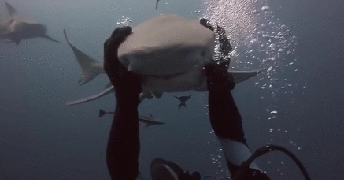 выбираете смешные гифки с акулами мебель школу