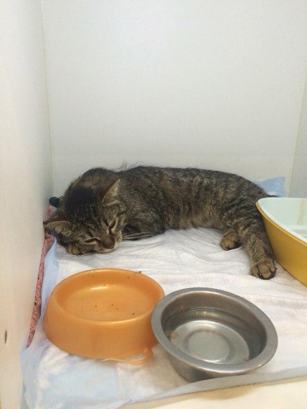 Спасение кота Саши. часть 3 Кот, Спасение, Спасибо что живой