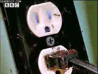Как муравьи могут сжечь ваш дом =)