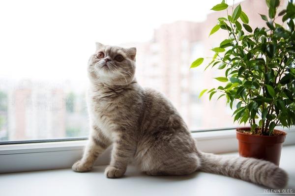 О котах и кошатниках
